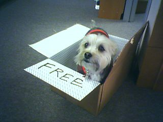 Step 1. Cut a hole in a box. Step 2. Put your dog in the box.